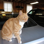 Casey on the car