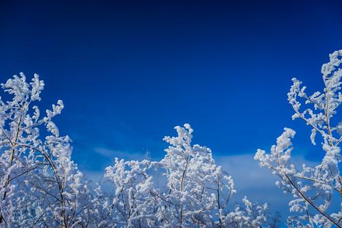 blue winter tree landscape frozen frost day branch hoarfrost bluesky clear rime whitechristmas soe winterscape