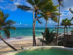 lagoon(0.0), atoll(0.0), estate(0.0), vacation(0.0), arecales(1.0), tropics(1.0), beach(1.0), tree(1.0), sea(1.0), ocean(1.0), bay(1.0), shore(1.0), resort(1.0), caribbean(1.0), coast(1.0),