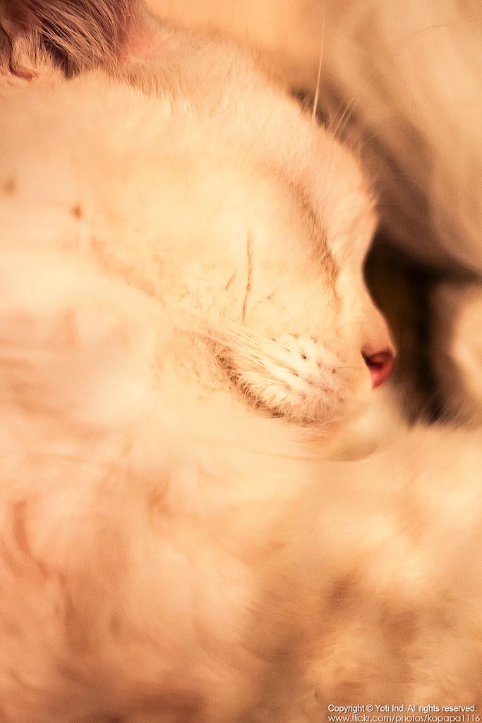 元氣貓主題餐廳 IMG_6117