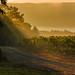 NY Vineyard