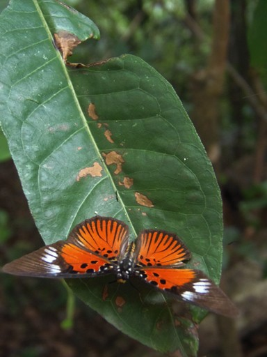 Butterfly as seen in its natural environments during walking safari