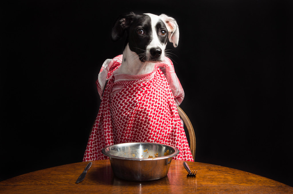 Thanksgiving Dinner time for this dog sitting at a table!