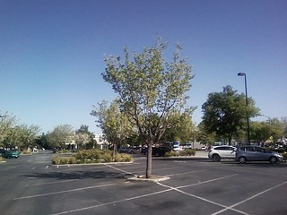 a tree in a parking lot 15