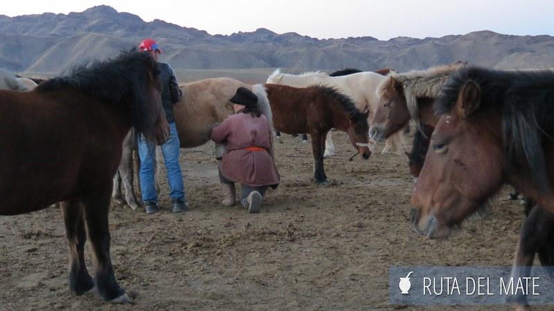 Desierto Gobi Mongolia (43)
