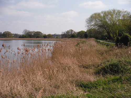 Reed Beds (II), Woodberry Wetlands