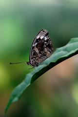 Papillons en Liberté 2017 - Photo 39