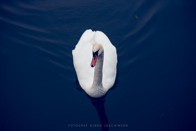 Swan, Tønsberg