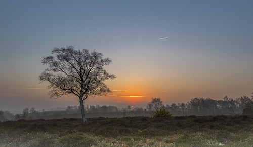 newforest rockfordcommon sunrise sun tree heather gorse landscape
