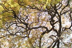 Branching forms