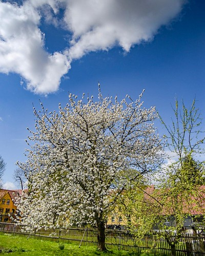 This is spring for me. . Fruittrees with blossoms. . And some clouds on the sky. . . . .