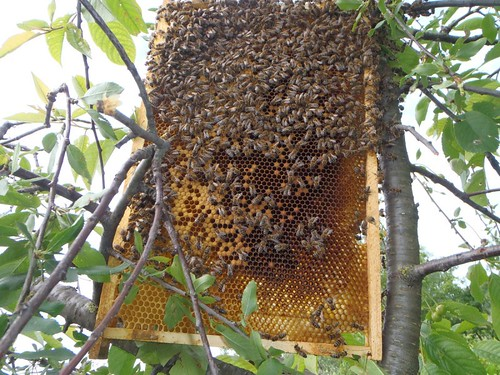 méhek 1