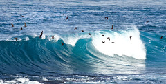 seabirds riding the waves off point hunter