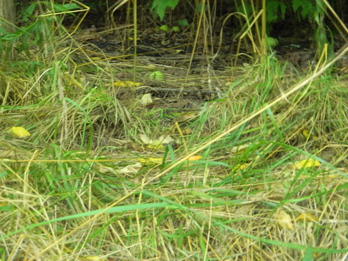 A Different Setting