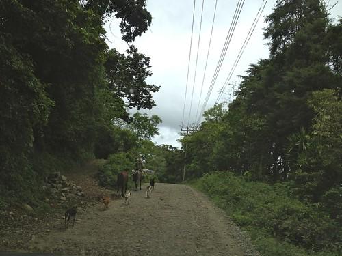 Heavy … horse/dog traffic