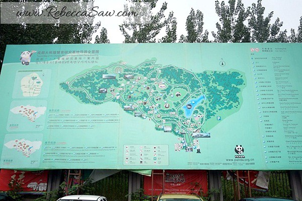 Chengdu - Panda Breeding Farm-005