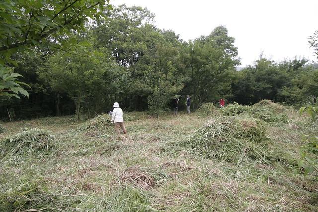 草刈り機で刈るだけでも,ずいぶんと風景が変わる.