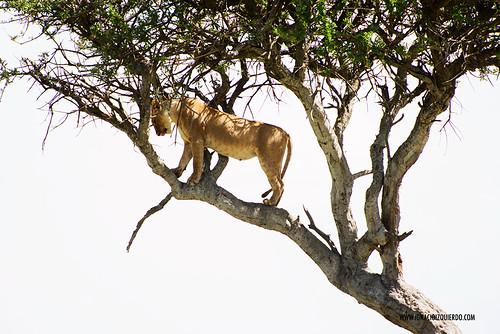 Kenia - Masai Mara 49
