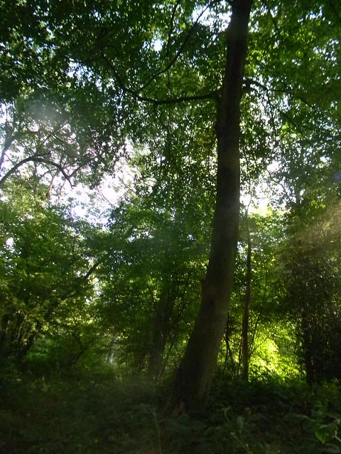 Sunlit tree 2