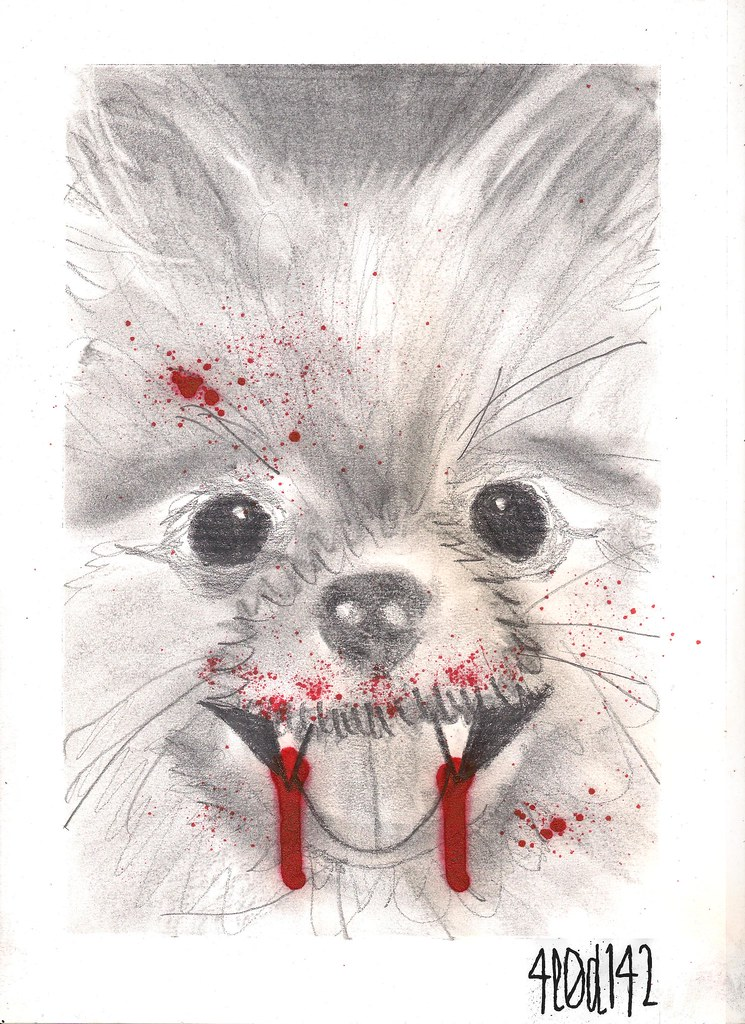 Evil Pomeranian Charcoal Pencil And Ink On Din A4 Alodia