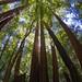 Exploring Redwoods