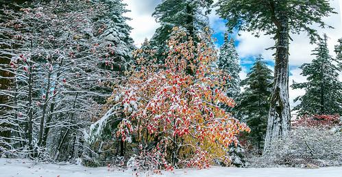 Yosemite - Christmas Comes Early