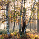 November-Morning