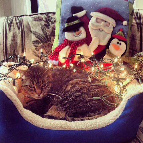 Meowy Christmas #catsofinstagram