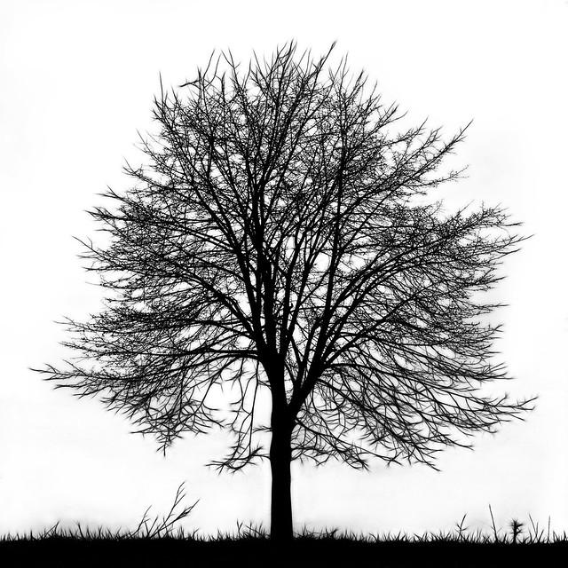 tree silhouette 2 flickr photo sharing. Black Bedroom Furniture Sets. Home Design Ideas