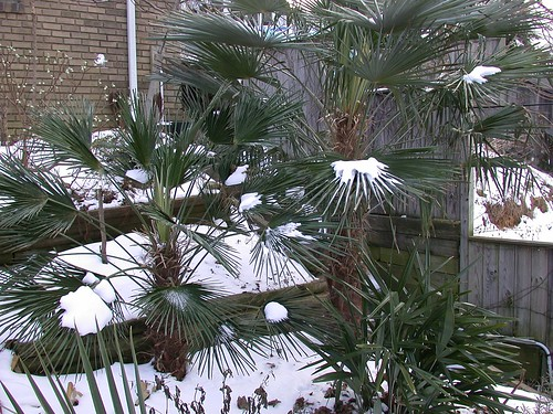 Frozen palms