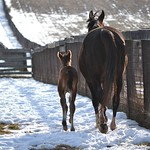 2014 Willi's Sweet Girl filly
