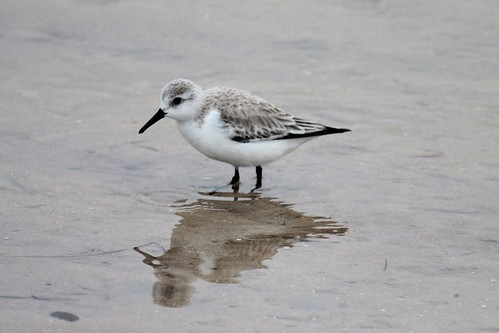 IMG_3596_Unknown_Shore_Bird