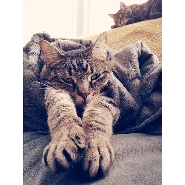 These two know how to relax. #cats