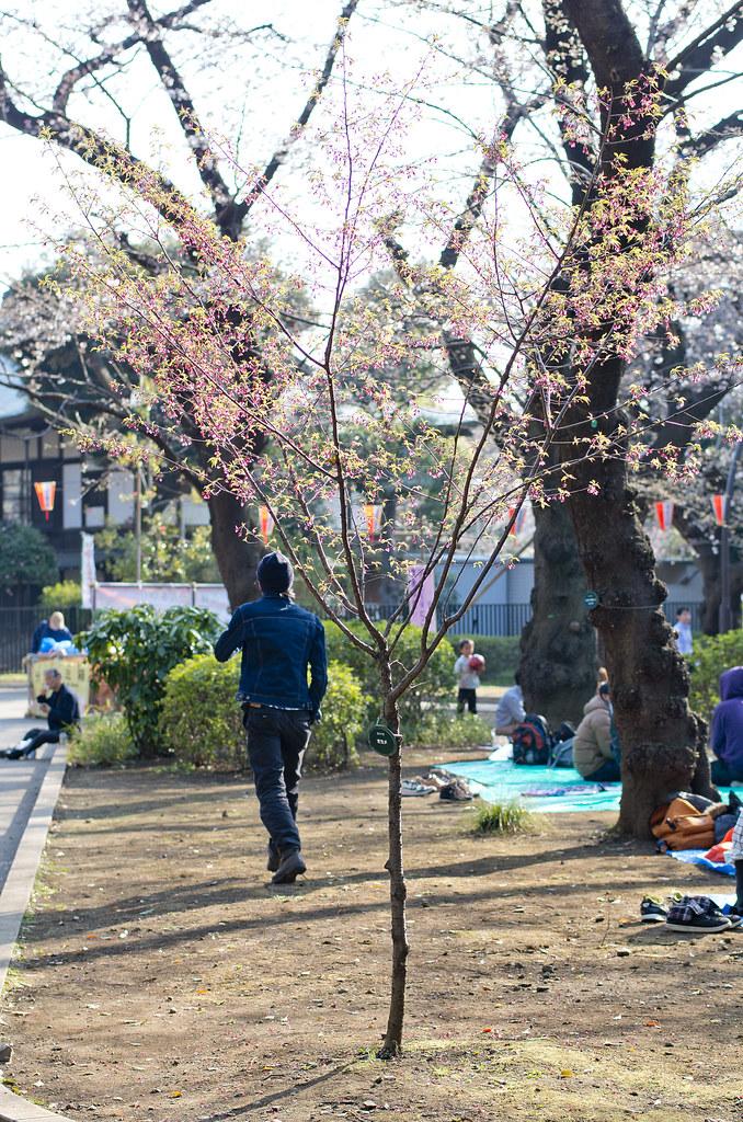 2014 東京賞櫻