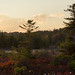 The Dolly Sods by Ken Krach Photography