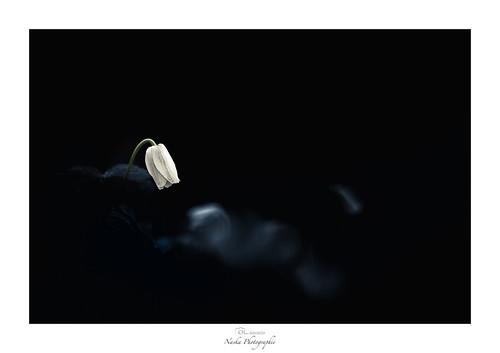 La dernière cigarette du condamné
