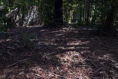 Dorrigo Forest Floor
