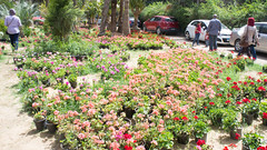 Flowers everywhere at Egypt's Flowers show 2017