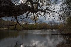 Pond - O.P. Schnabel Park - San Antonio - Texas - 18 December 2016