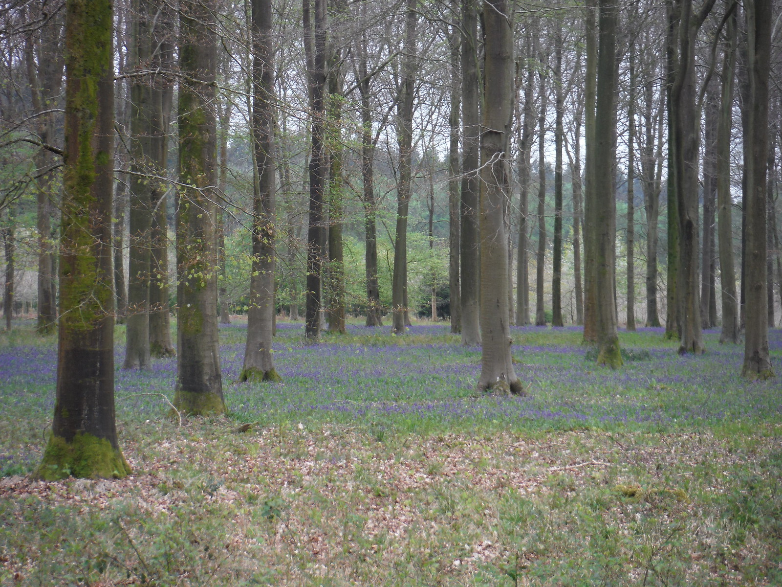 Fairoak Copse, Clarendon Park SWC Walk 265 - Dean to Mottisfont and Dunbridge (Alternative Start from Salisbury)