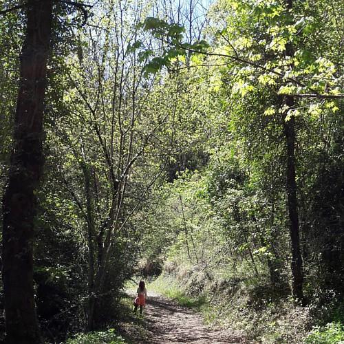La forêt Giono, outre son hommage à cet écrivain très connu, a un côté pédagogique. À certains endroits, des panneaux parlent de l'endroit, ou de la nature.  Et si on suit la P'tite Bout, on va arriver à une petite cascade 😊  #vercors #drome  #rhone