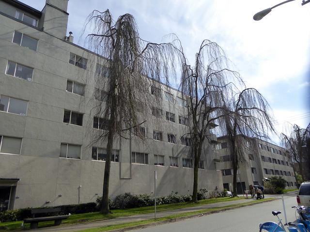 Wispy Trees, Panasonic DMC-ZS40