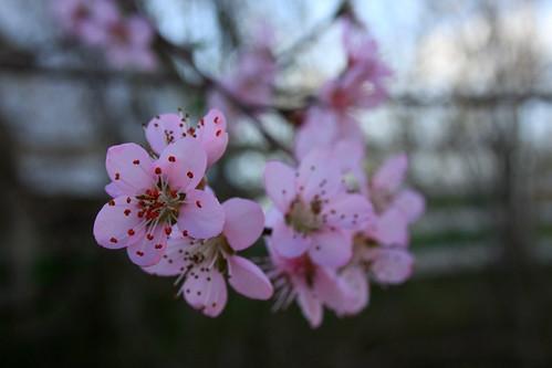 Spring Kentucky 2013