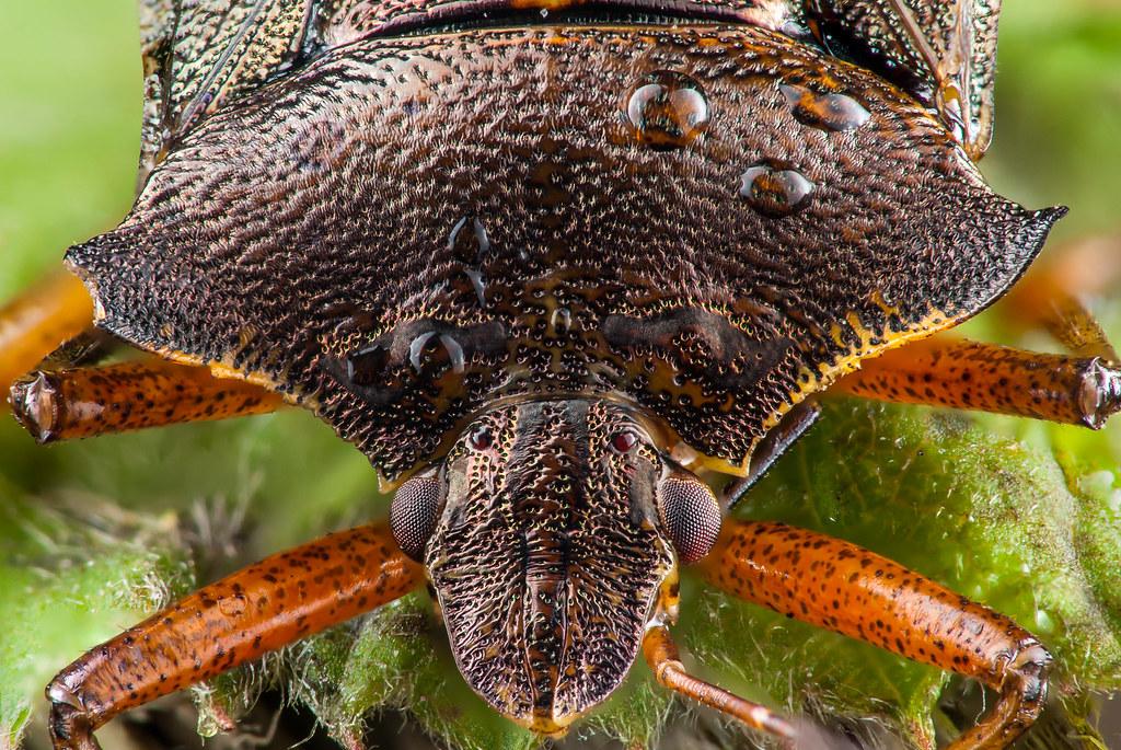 A dead Bug