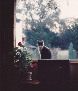 Daisy, Summer 1984