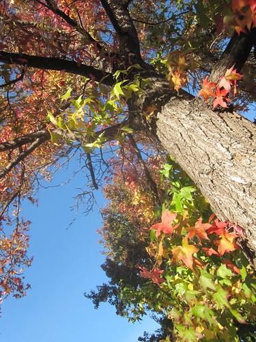 Tree Perspective