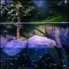 Optical Fishes by tinybubble photos virna tendean
