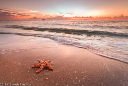 ocean beach sunrise landscape waves florida starfish sanddunes satesh boyntonbeachinlet peaceinart