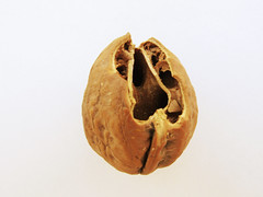 生後2ヶ月から4ヶ月のリスが食べた胡桃