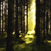 Forest light 1